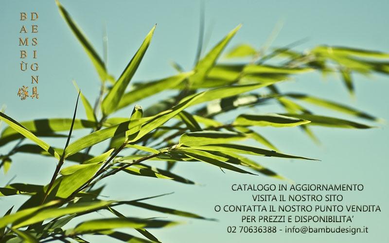 Vendita Piante Bambu Milano.Catalogo Bambu Design Milano